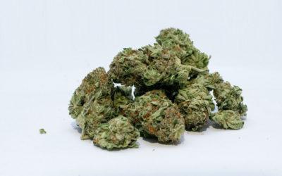 Cannabis et neuro-développement